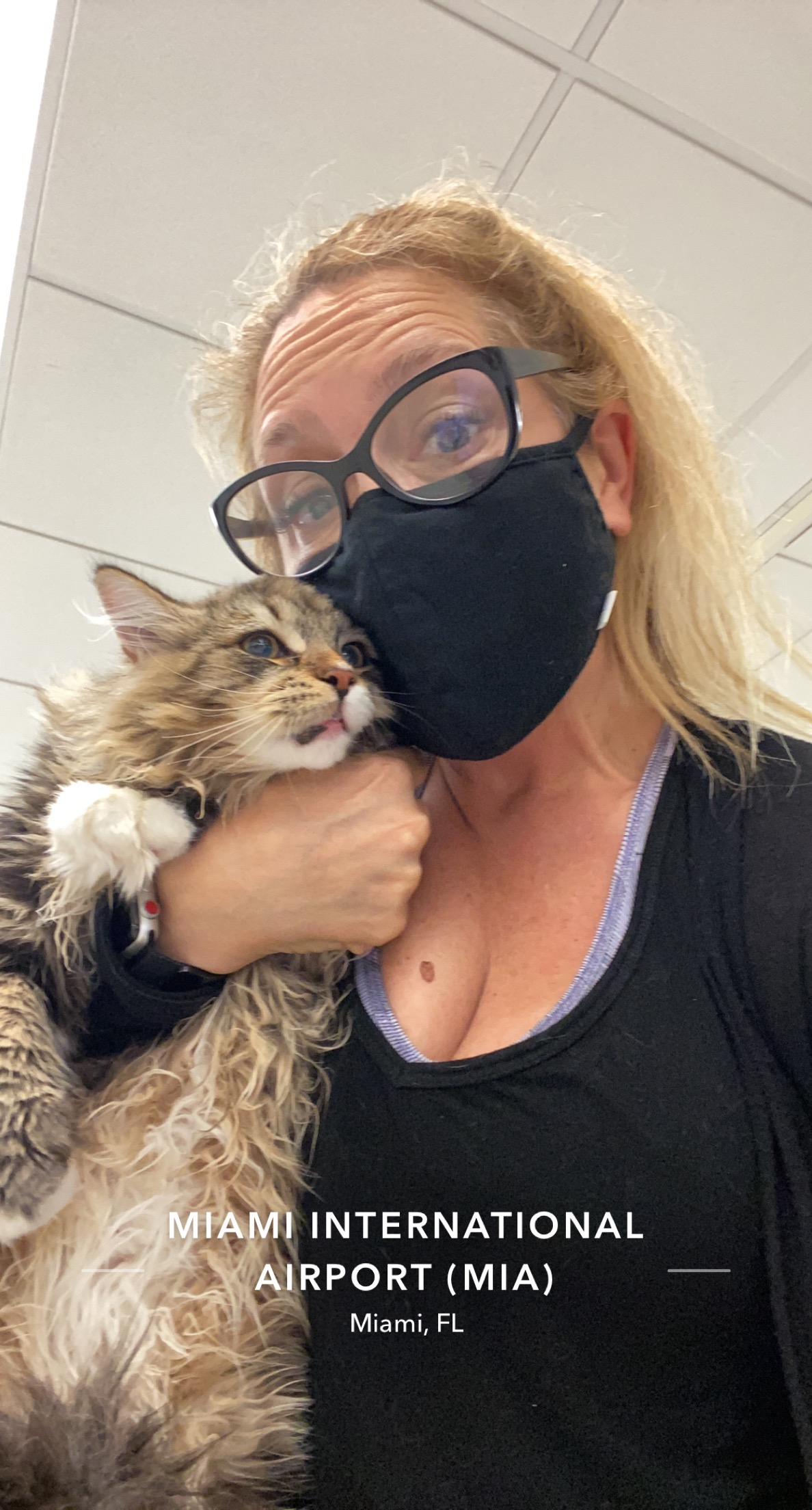 pet nanny picking up a cat imported from Russia