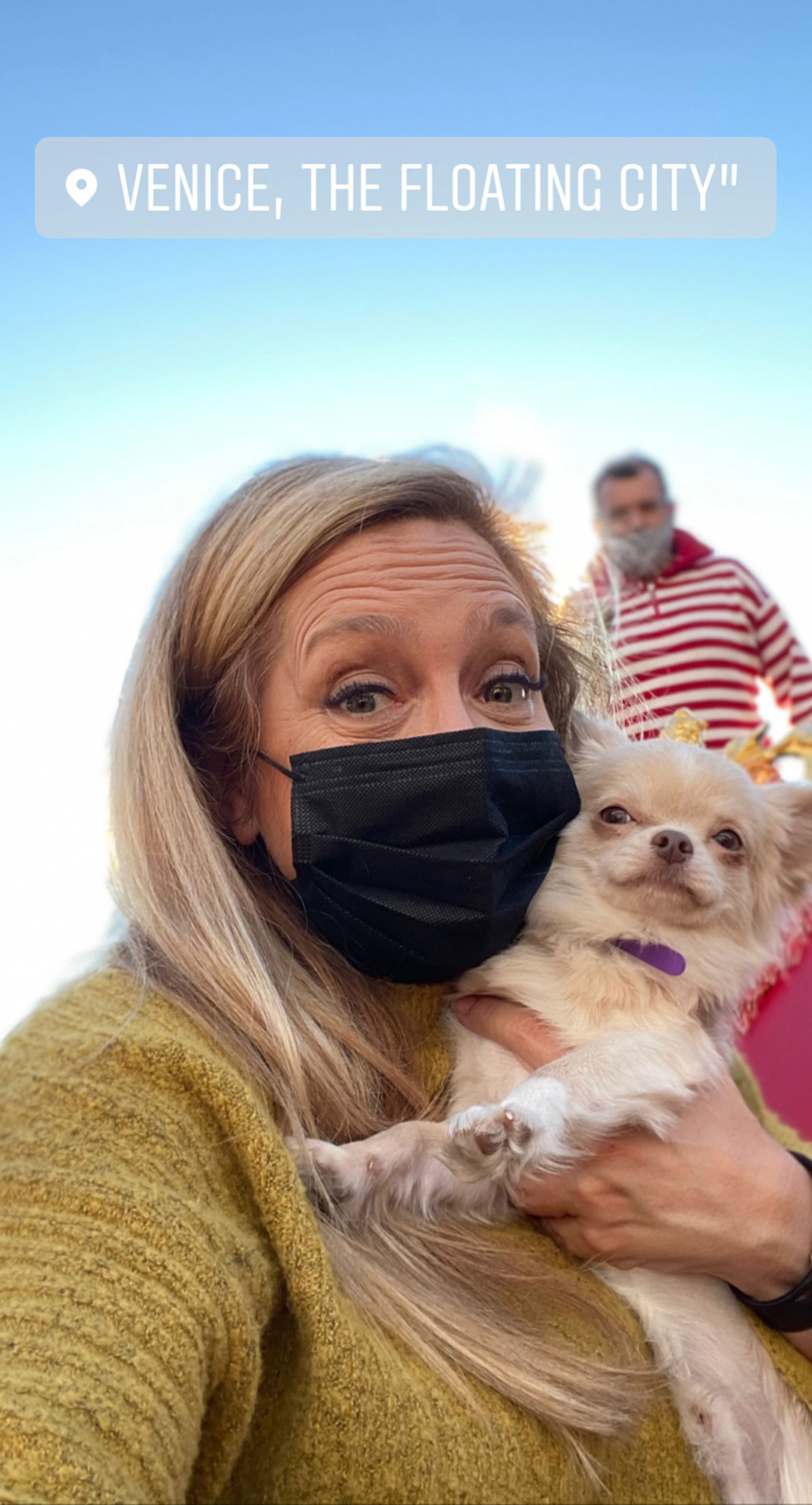 Flight Pet Nanny transporting a Chihuahua from Venice Italy to the United States