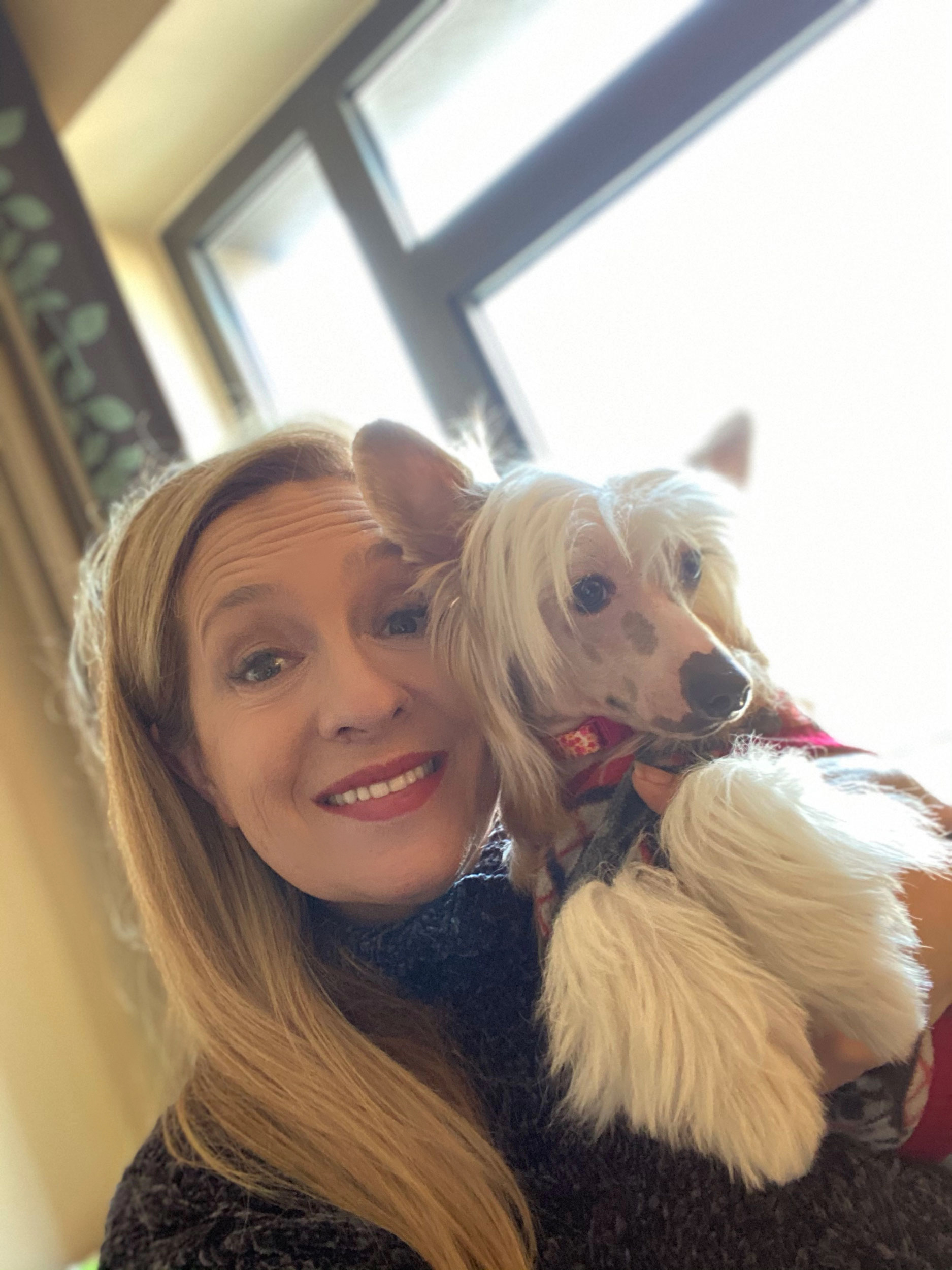 Flight Pet Nanny transporting Chinese Crested puppies from Turkey to the United States