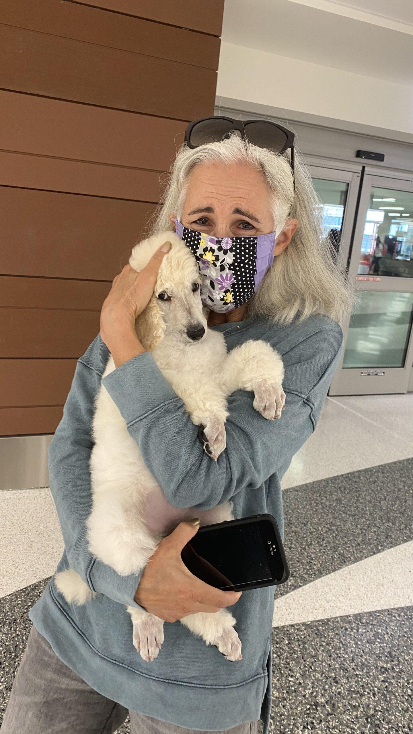 Poodle Puppy Flight Nanny Transport